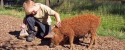 haustierpark-wildpferdgehege-liebenthal-artikelbild