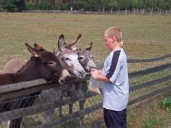 haustierpark-wildpferdgehege-liebenthal-esel