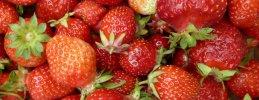 berliner-beerengarten-berlin-schoenfliess-erdbeeren