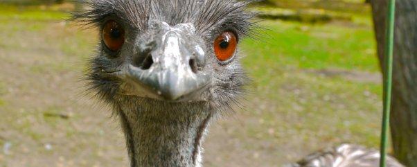 Ausflüge mit Kindern Berlin/Brandenburg Tipp: Zoo ...