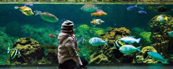 zoo aquarium berlin wird 100 jahre gro e jubil umsfeier ytti. Black Bedroom Furniture Sets. Home Design Ideas