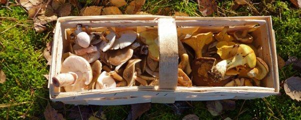 tipps rund um das pilze sammeln in berlin und brandenburg berlin pilze montag november. Black Bedroom Furniture Sets. Home Design Ideas