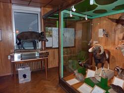 privates-museum-fuer-tierkunde-berlin-innen-1