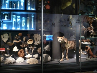 museum-fuer-naturkunde-berlin-1