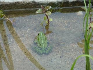 frosch-oekowerk-berlin-grunewald