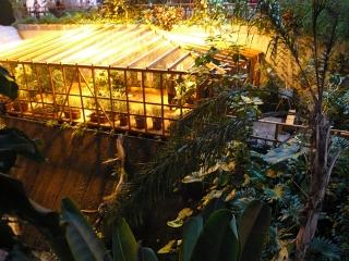 biosphaere-potsdam-schmetterlingshaus