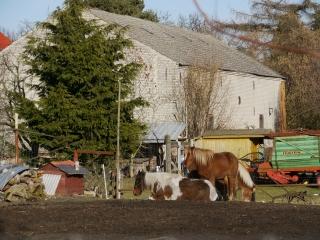 pferde-schloss-diedersdorf-umland-berlin.JPG