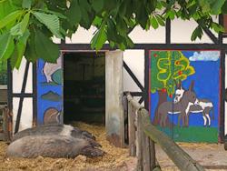 sommerferien-berlin-kinderbauernhof-goerlitzer