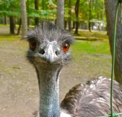 zoo-eberswalde-emu