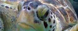 zoo-tierpark-berlin-aquarium-schildkroete-artikelbild