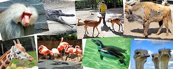 zoo-tierpark-berlin-uebersicht-artikelbild