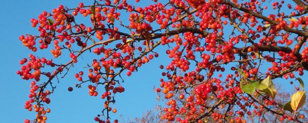 Herbstferien-Berlin