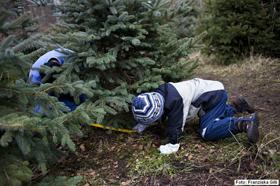 Weihnachtsbaum Berlin.Weihnachtsbäume Selber Schlagen In Mellensee Ytti De