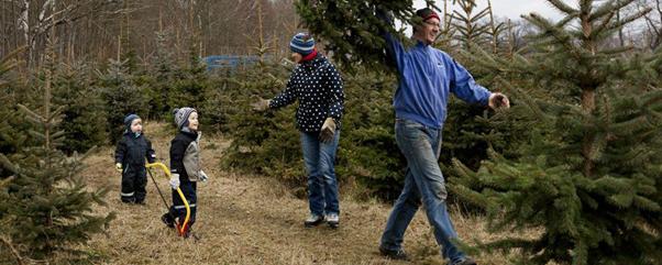 Weihnachtsbaum Fun.Weihnachtsbäume Selber Schlagen In Mellensee Ytti De