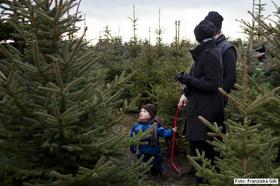 Weihnachtsbaum frisch geschlagen berlin