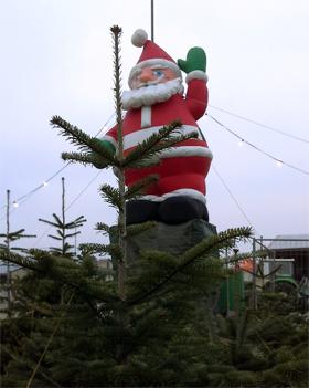 Weihnachtsbaum Fällen Berlin.Weihnachtsbäume Selbst Schlagen Ytti De Empfehlungsportal Ytti