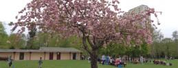 Ausflug-Spandau-Wilhelmstadt -Freizeitsportanlage-Suedpark-Artikelbild