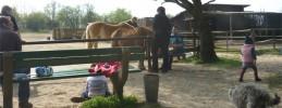 reiten-familien-kinder-berlin-ponyhof-am-weinmeisterhornweg-staaken Artikelbild 2