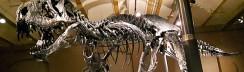 T-Rex im Naturkundemuseum © ytti.de / Maja