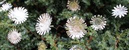 Weihnachtsbasteln, Weihnachtssterne aus Teelichtern basteln