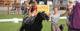 Mafz Brandenburger Pferde Sommer