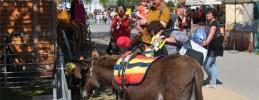 MAFZ Erlebnispark Paaren Esel- und Mulitreffen 2
