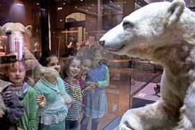 Naqturkundemuseum Berlin - Ausflugsziel mit Kindern Knut
