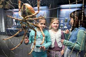 Naturkundemuseum Berlin Ausflugsziehl mit Kindern