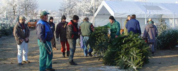 Tannenhof Jung - Weihnachtsbaum selber schlagen in Zernitz – Lohm Brandenburg
