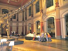 Kindergeburtstag im Naturkundemuseum Berlin