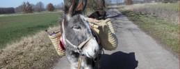 Eselwanderung ab Bahnhof Wiesenburg mit den Eselnomaden 5