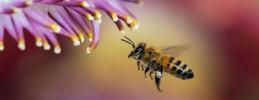 Malwettbewerb zum Berliner Kinderkarneval der Kulturen Bienen 2