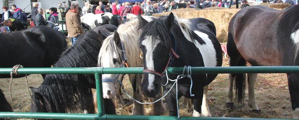 Gutengermendorfer Pferde- und Hobbymarkt a