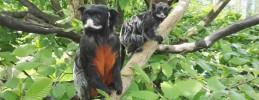 Affen-Zoo Jocksdorf - Tierpark - Wildgehege Galerie