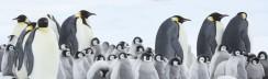 die-reise-der-pinguine-2-2017-film