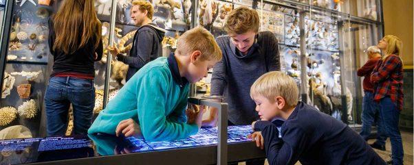 Herbstferien Berlin 2018 im Naturkundemuseum