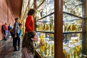 Herbstferien Berlin Naturkundemuseum Wand der biologischen Vielfalt