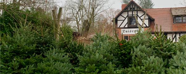 Weihnachtsbaum selbst schlagen im kleinen Dorf Holzhausen (Kyritz)