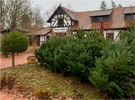 Weihnachtsbaum selbst schlagen in Berlin und Brandenburg 2019 - Öffnungszeiten, Adressen