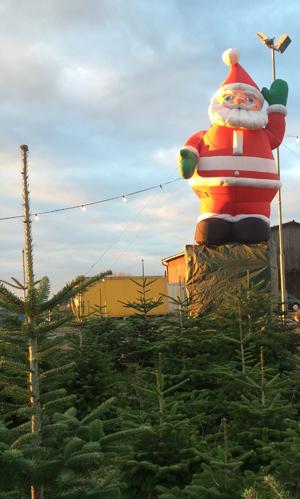 Vom 2. bis zum 4. Adventswochenende habt Ihr die Möglichkeit, euren Weihnachtsbaum in dieser Weihnachtsbaumanlage selbst zu sägen oder einen bereits gesägten Weihnachtsbaum auszusuchen