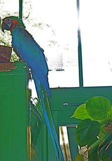 Blumencafe Berlin Prenzlauer Berg Papageien