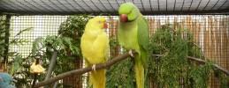 Botanischer-Garten-Vogelausstellung-1a