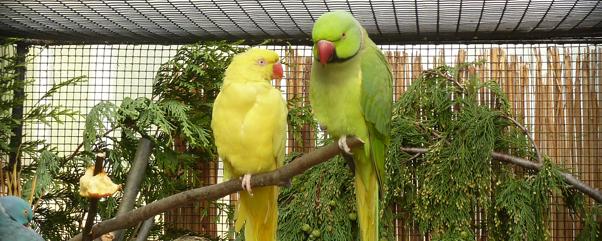 Vogelausstellung Im Botanischen Garten Von Berlin