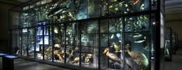 Museum-fuer-Naturkunde-Berlin-Biodivwand-Artikel