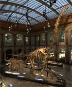 Museum-fuer-Naturkunde-Berlin-artikelbild