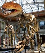 Taschenlampenführung - Museum für Naturkunde Berlin