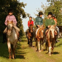 Ponyhof Neuholland - Offenes Reiten (ohne Anmeldung) - für Kinder ab 4 Jahren