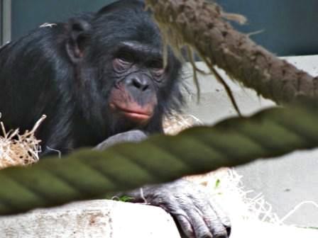 Kinder-Ausflug Zoobesuch Zoologischer Garten Berlin Tiergarten | ytti