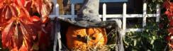 Halloween Kürbismann © Margit Voeltz / pixelio