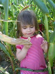 Kinderbauernhof Marienhof bei Ribbeck im Havelland Brandenburg - Großes Maislabyrinth und Barfußpfad